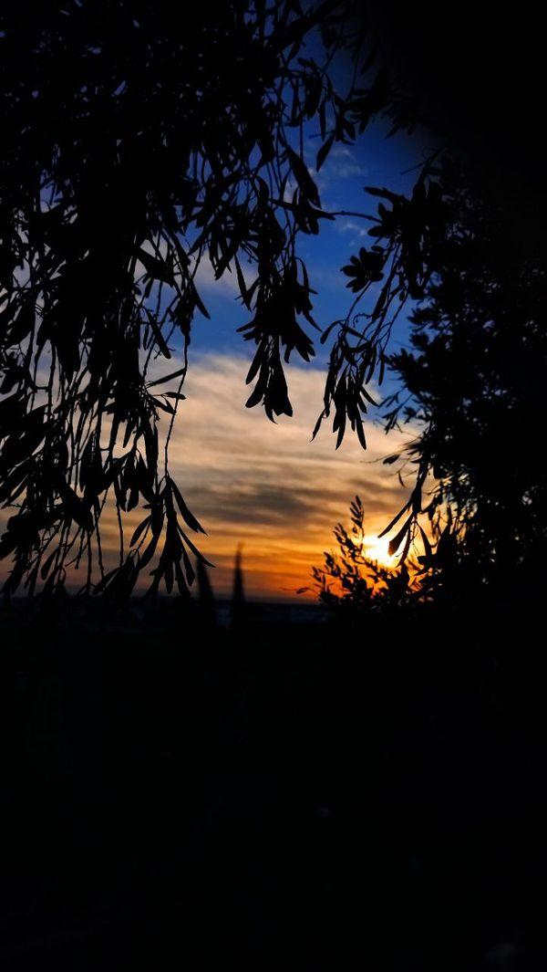 Sunset #$