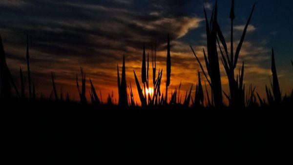 Sunset#_