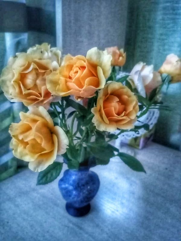 Yellow roses in a blue vase.
