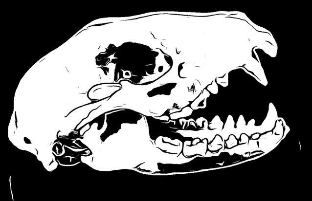 Brawn&Bone