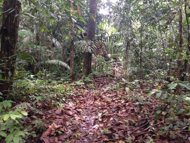 Borneo Land