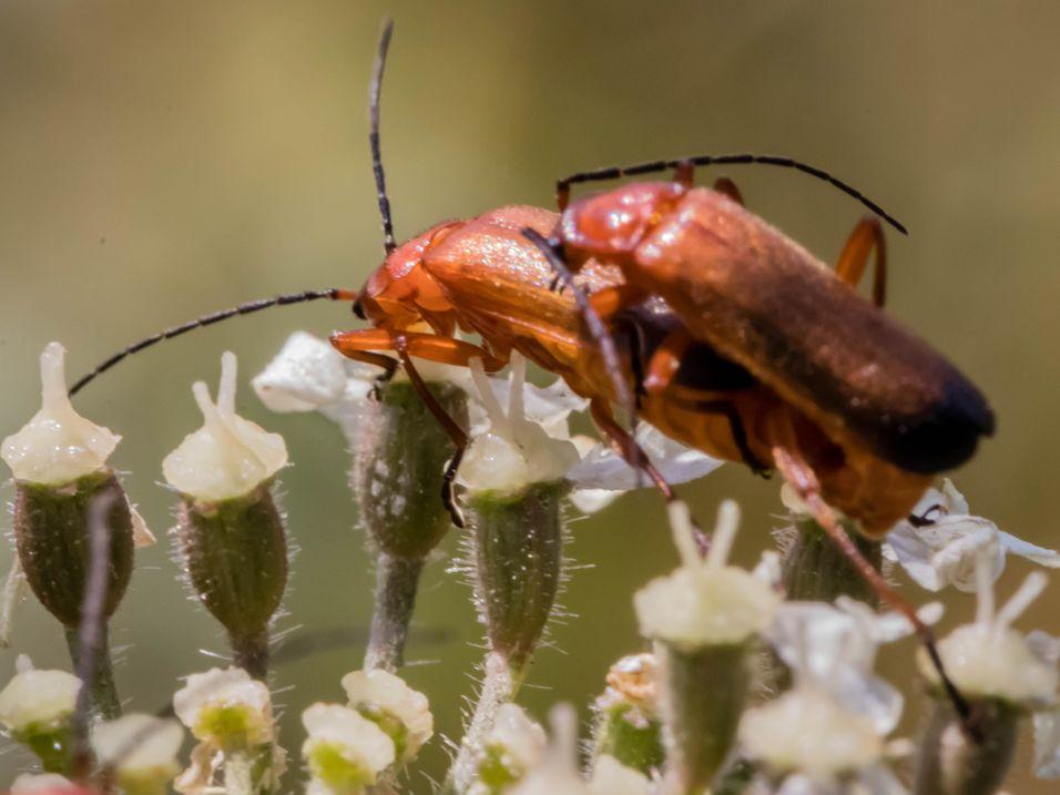 bugs-0793