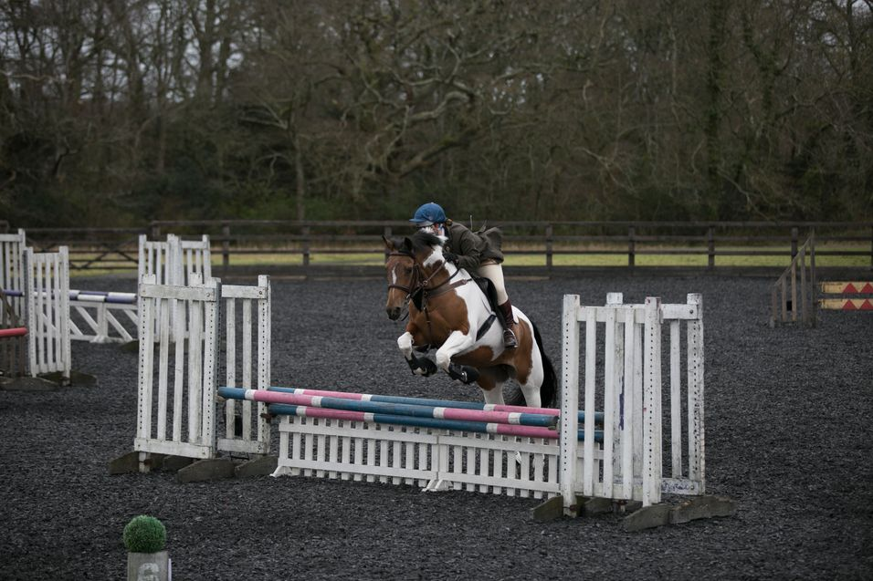 Moreton horse jumping
