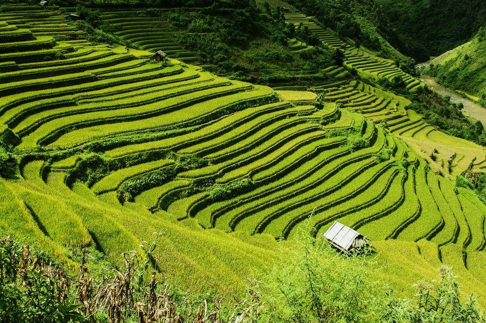 rice-terraces-276017_1280.jpg