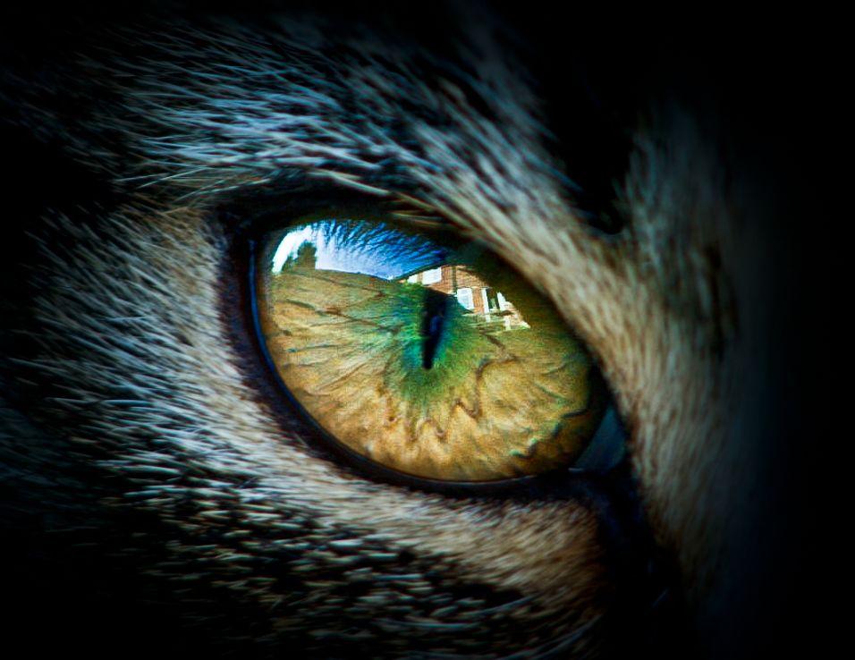 Cat's Eye Viewing
