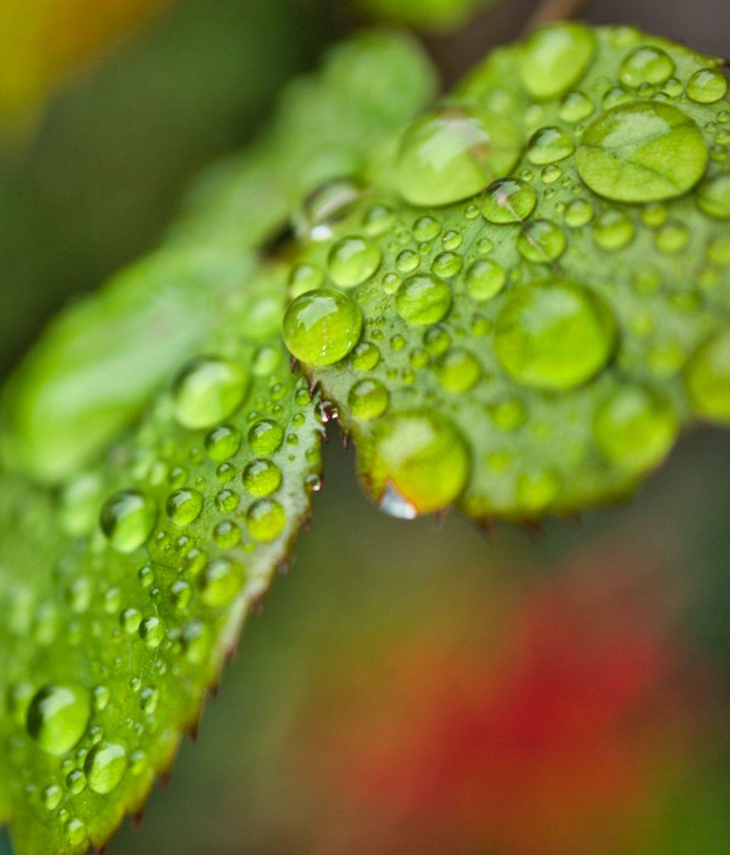 Wet leaf after the rain