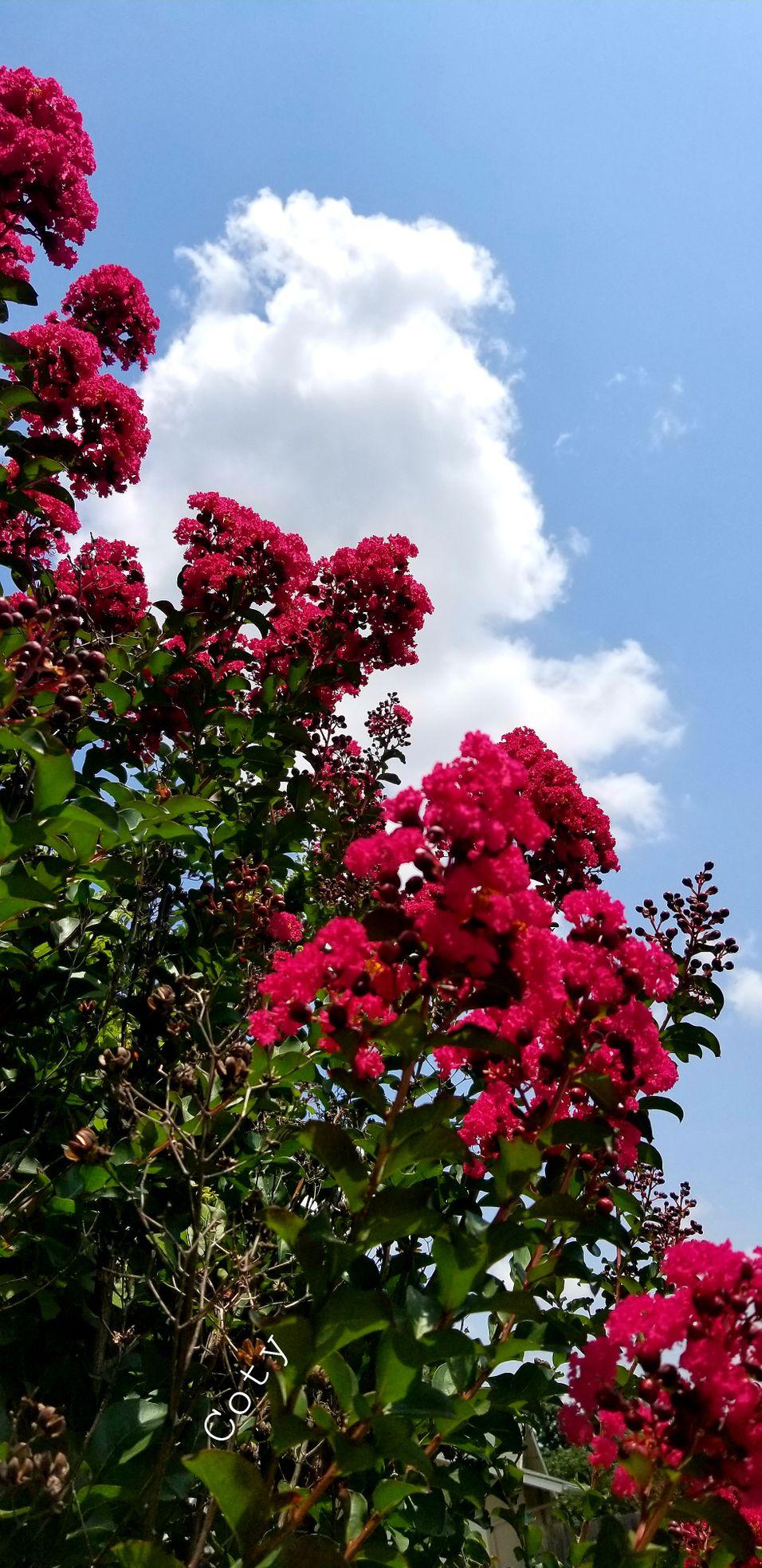 Sky and flowers 20210729_013622.jpg